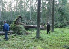 Poland receives final warning from ECJ over logging in the Białowieża Forest