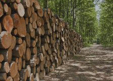 Worldwide output of wood products is at 70-year high