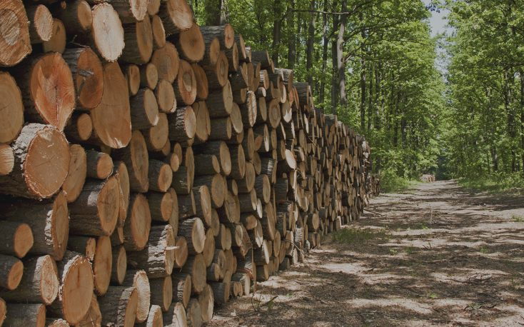 Worldwide sawlog prices drop, while lumber trade intensifies