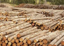 New Zealand's log export prices fall sharply as Chinese demand crashes