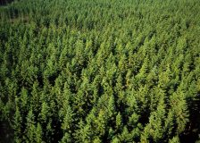 Germany: Calls for more softwood planting
