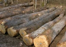 Ukraine penalized by the European Commission over roundwood export ban