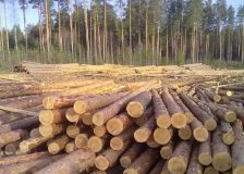 Roundwood products prices in Estonia have risen sharply in October