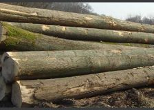 Timber market in Romania has to improve competition