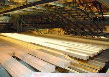 Softwood lumber exports from Belarus to the EU went up by 50%, despite export ban