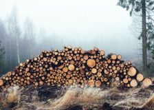 Estonian roundwood prices pick up in March