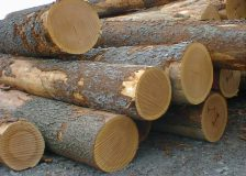 France: Price of logs at auctions drop sharply due to China-US trade war