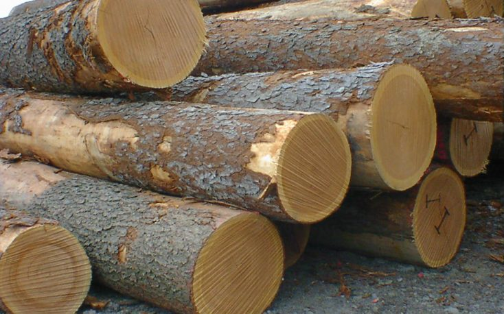 Prices of oak in France under pressure