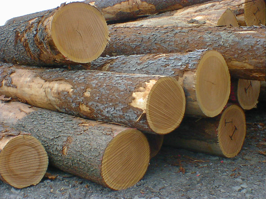 Sawmills In France At Risk Because Of Higher Oak Logs