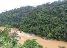 Myanmar implements 10-year reforestation plan