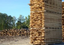 Germany: Timber traders worried about supply shortage