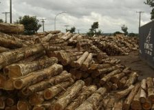 India: Latest prices for teak, sawnwood and plywood