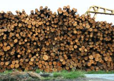 Global sawlog prices fall sharply in the first quarter of 2019