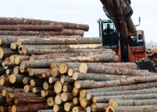 Softwood logs exports from the EU to China doubled during Q1/2019