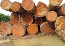 West Africa: Logs & sawnwood FOB prices under pressure