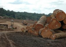 Sharp drop in China's tropical log imports