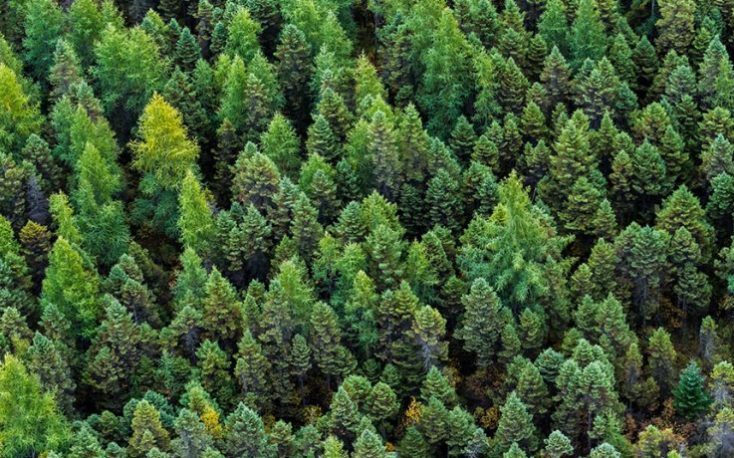 Finnish forest industry exports drop 18% in H1/2020