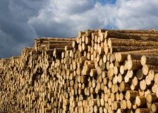 Hardwood logs exports from Europe on the rise