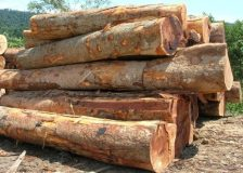 Rising prices for Sarawak logs