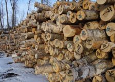 Global sawlog prices on a downward trend in Q1/2019