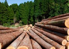UK warns about shortage of timber for pallets