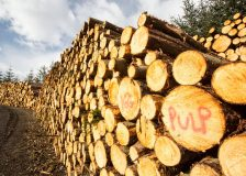 Global wood fiber price indices moved up in the 3Q/20