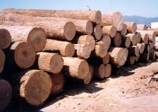 Russia: Sveza plans to set up its own logging company