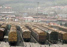 European softwood logs exports to China triple as the bark beetle infestation advances