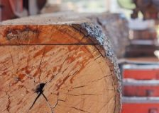 Low impact of corona crisis on the Latvian sawmill industry