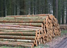 Standing timber prices in the UK go 30% up during one year period