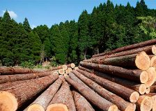 Ten timber trading companies in Europe accused of importing illegal wood from DRC