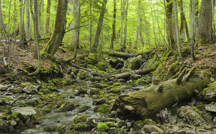 New map reveals last primary forests in Europe