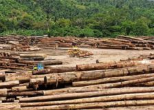 New Zealand's logs price decreases, as Chinese market uncertain