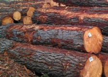 New Zealand, top softwood logs exporter for China in 2018