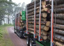 Södra increases timber prices