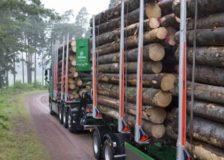 Södra Skog to temporarily stop logging