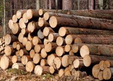 German exports of logs at record pace