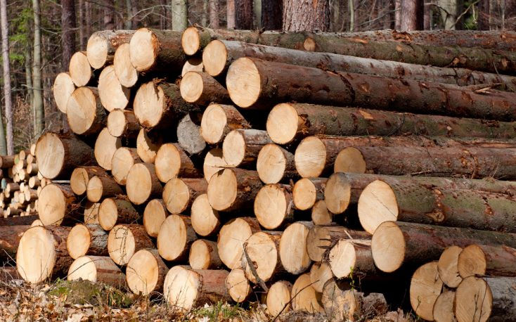 Fivefold increase for the European softwood logs exports to China