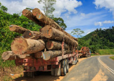 European timber operations in Africa move to Asia