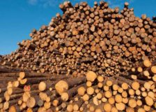 Germany: Dramatic fall in softwood pulplog prices