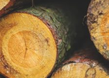 Negative performance for the US forest products industry