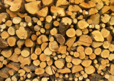 North American pulpwood prices increased during the 1Q/19
