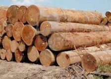 Government of Sarawak stops timber licensing