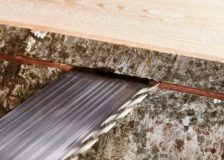 Hardwood sawmills in Germany expect rising prices