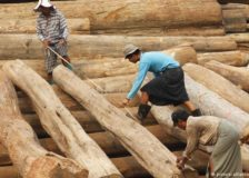 Myanmar allows plantation teak exports