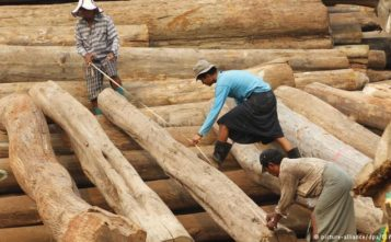 Belarus Further Limits The Logs Exports To The West