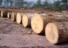 Central/West Africa: Logs & sawnwood FOB price forecast to improve