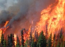 European Commission: More countries than ever hit by forest fires