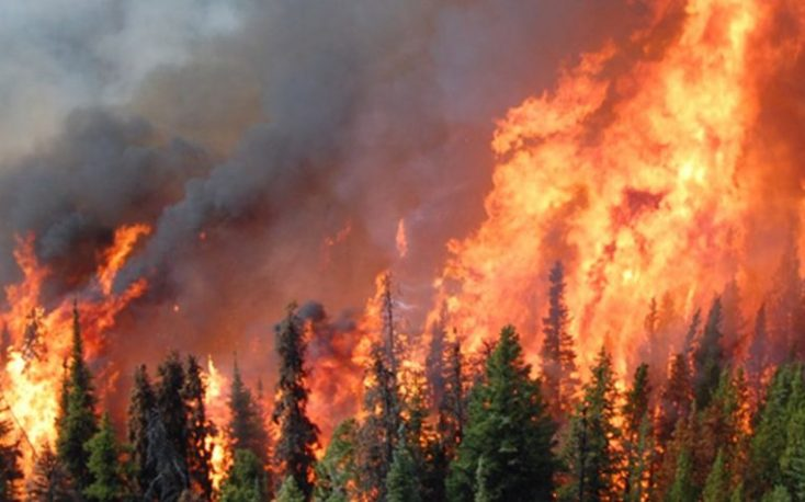 Fires destroy Sweden's forests