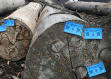 EUTR and FLEGT cause market shifts in the tropical wood market